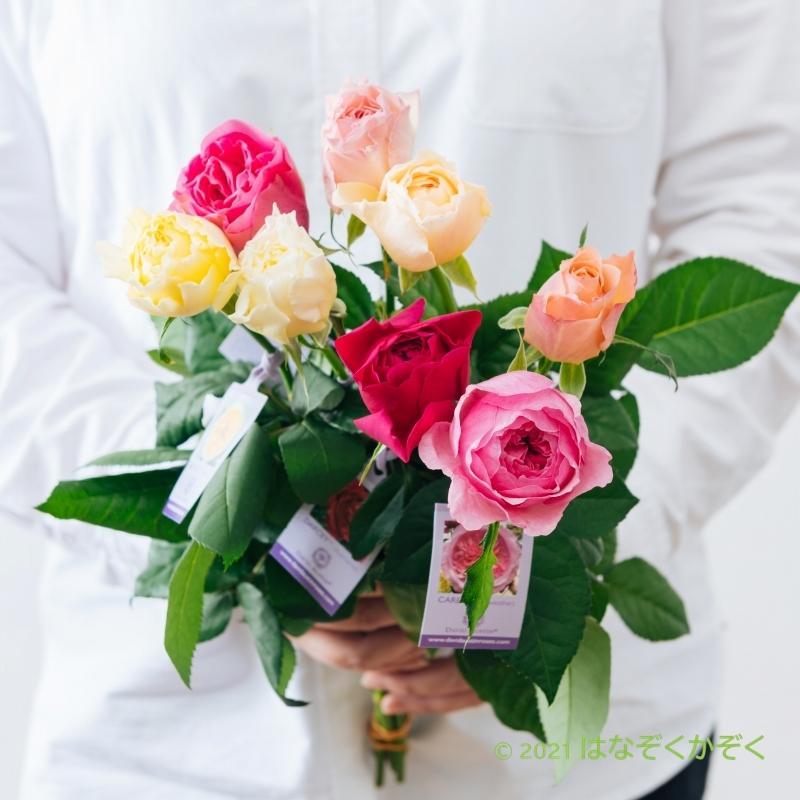 香りのバラ イングリッシュローズアソート7本