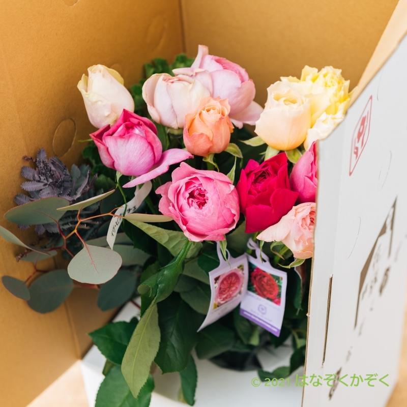 香りのバラ イヴと仲間たちアソート15本
