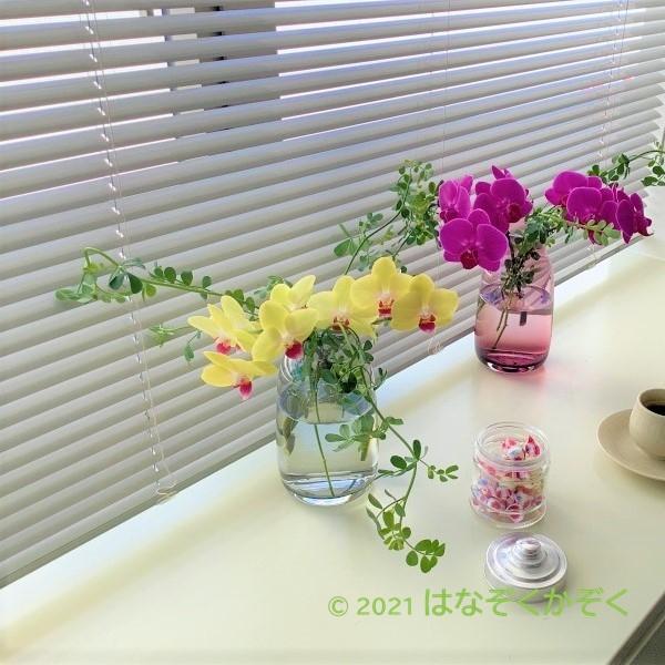 【大人気!】ミディ胡蝶蘭4本と季節のグリーン1種セット