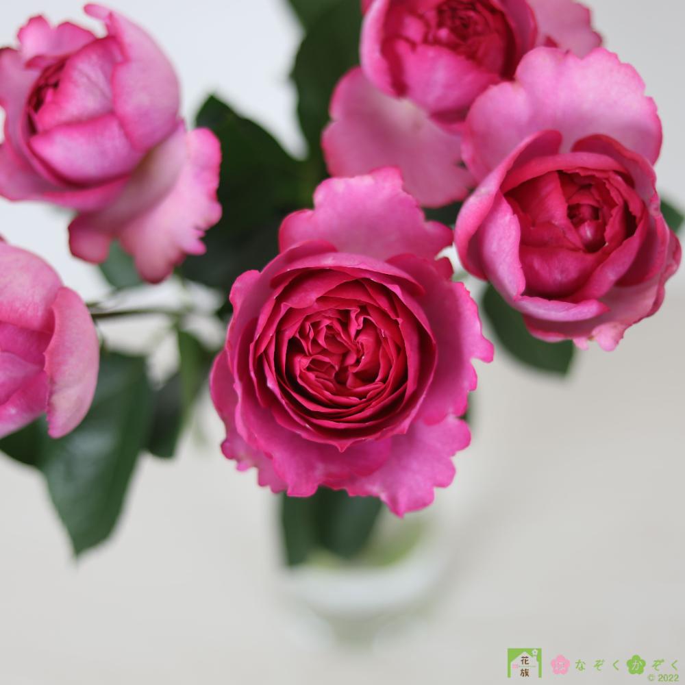 ハウスの中から最もゴージャスなバラを選び抜きました。イヴピアッチェ 10本