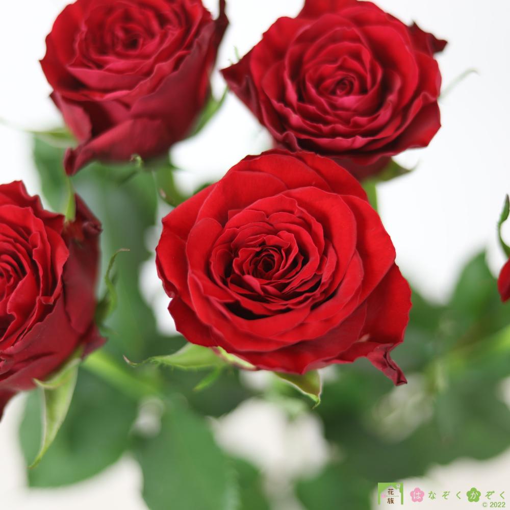 【バラ 赤】ブリランテ/ハウスの中から最もゴージャスなバラをお届け。10本