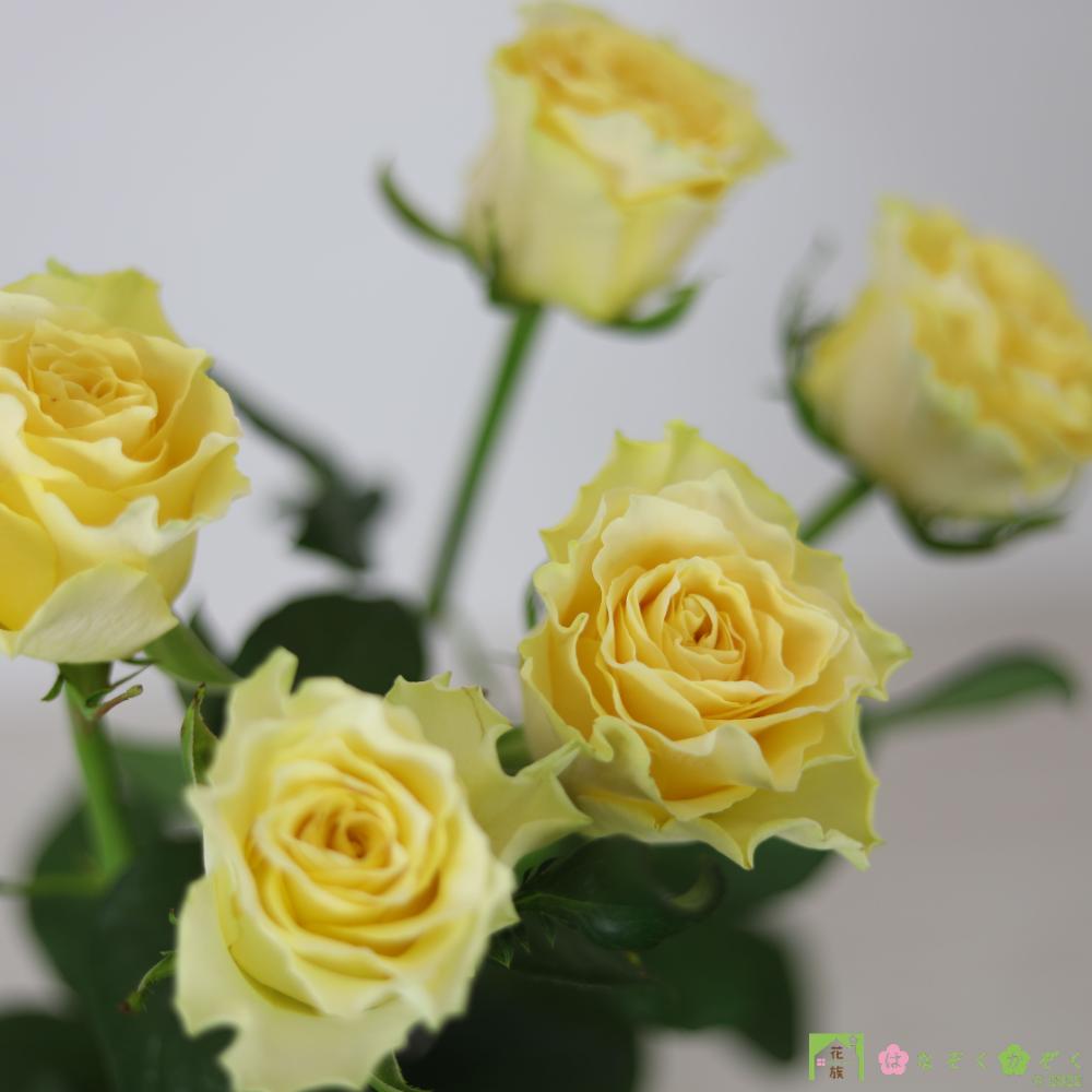 【バラ 黄色】スペード/ハウスの中から最もゴージャスなバラをお届け。10本
