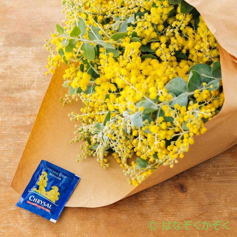 【販売終了】ミモザアカシア10本 春を呼ぶ黄色