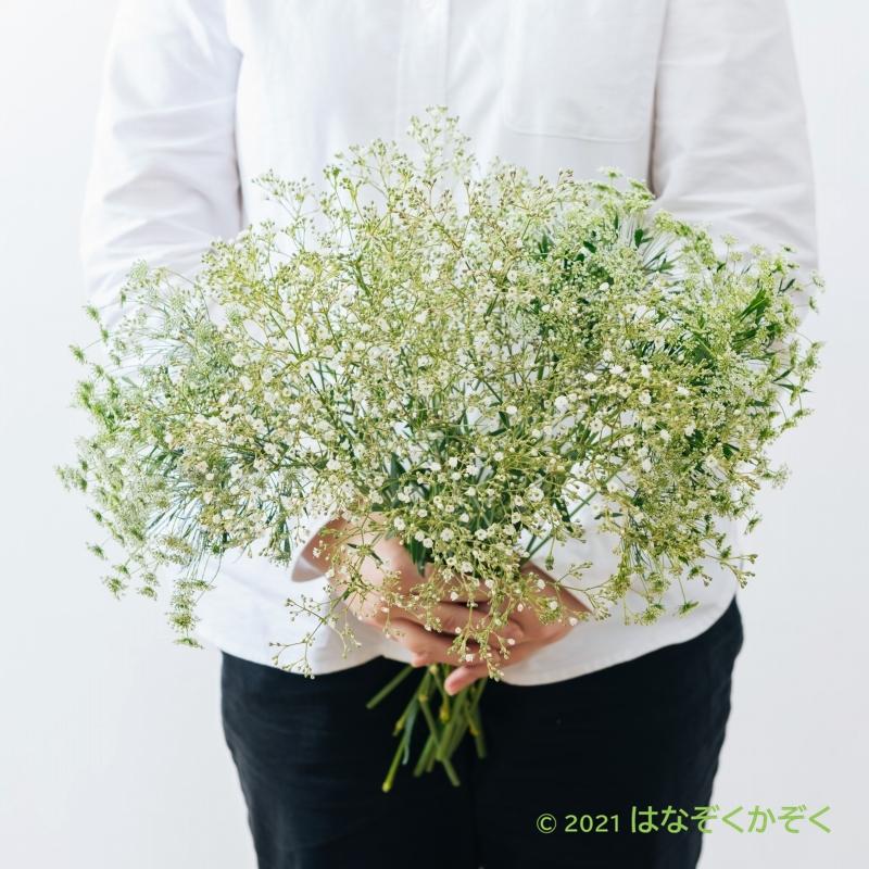 金井園芸ホワイト3種類MIX 22本