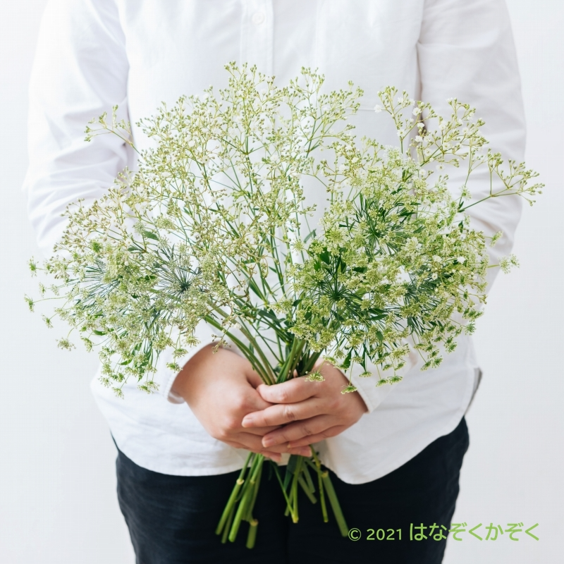 金井園芸ホワイト3種類MIX 15本