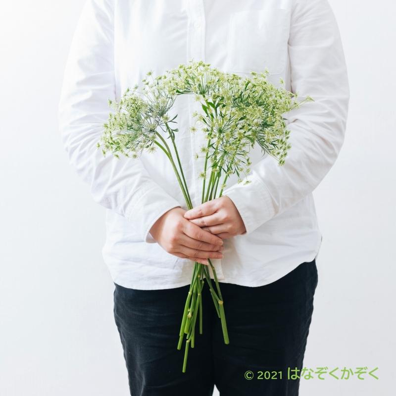 金井園芸ホワイト2種類MIX 11本