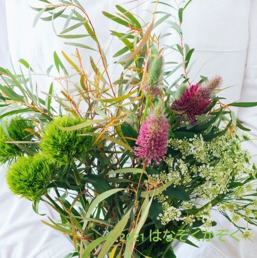 金井園芸草花セット12本