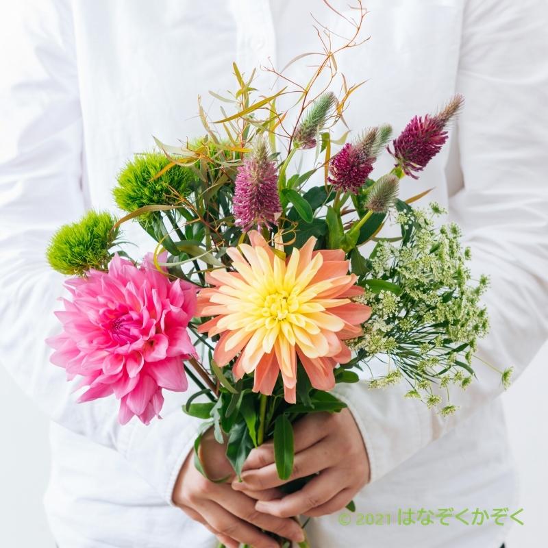 金井園芸スペシャルMIX 12本