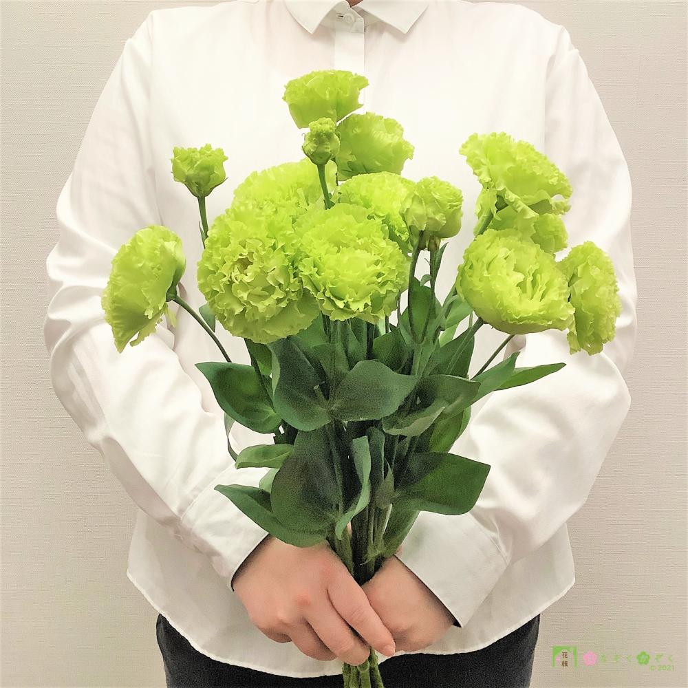 福島浪江町-トルコキキョウ「アンバーダブルミント」(透きとおるような緑のフリル 10輪をお届け)